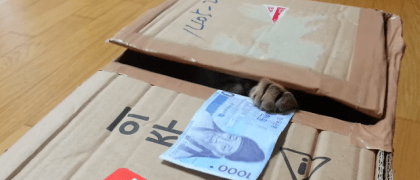 kitty-bank-cat-box