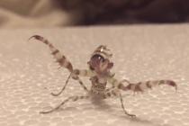 mantis-kung-fu