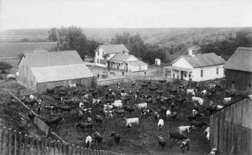 L. K. Baldwin Dairy Ranch circa 1847. Baldwin was a county supervisor and president of the Santa Cruz City Bank. Photo: Santa Cruz City Museum of Natural History