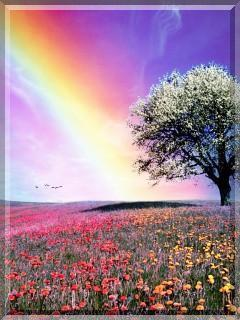 colourful nature wallpapers for mobile phone reviewwalls co