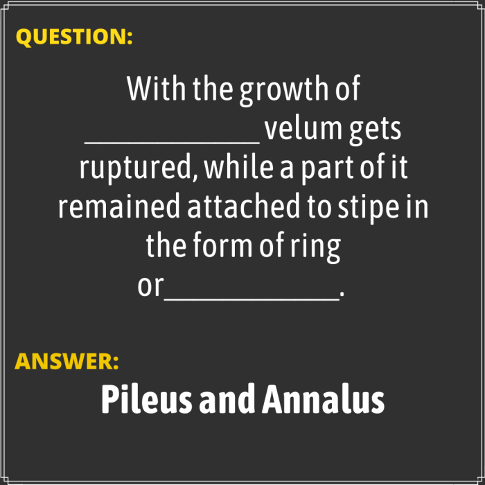With the growth of ____________ velum gets ruptured, while a part of it remained attached to sti ...