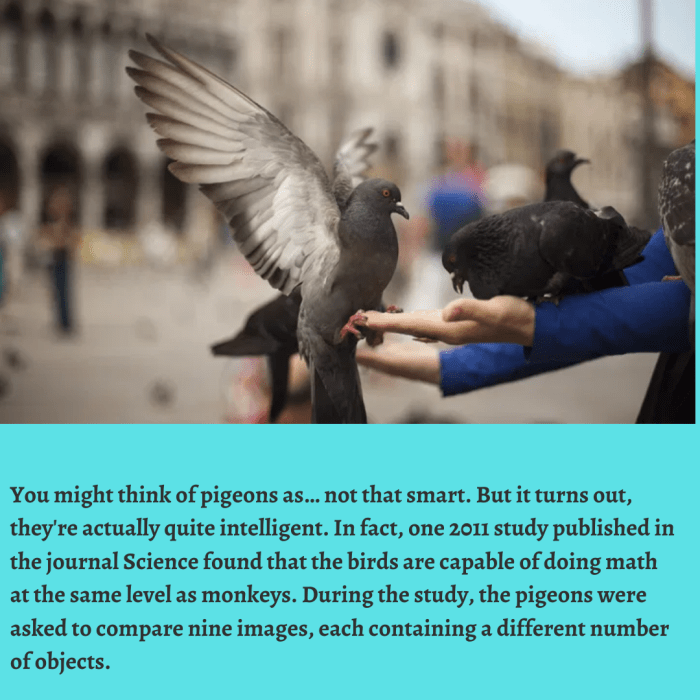You might think of pigeons as… not that smart. But it turns out, they're actually quite in ...