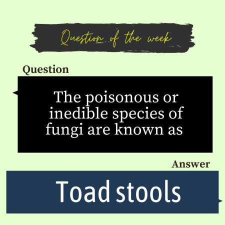 The poisonous or inedible species of fungi are known as