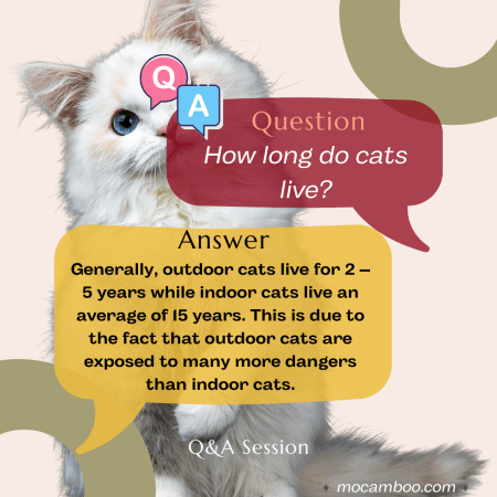 Q. How long do cats live? Ans. Generally, outdoor cats live for 2 – 5 years while indoor cats li ...