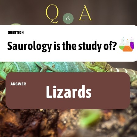 Saurology is the study of?