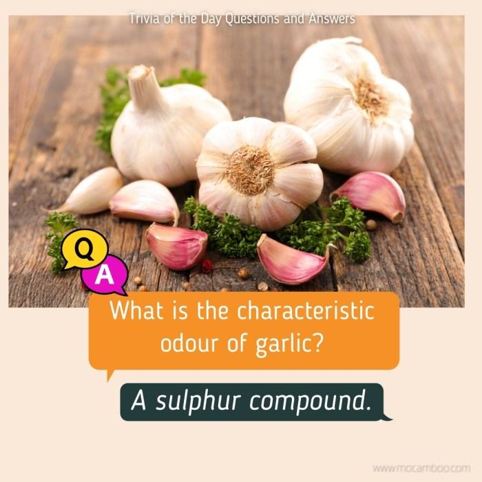 What is the characteristic odour of garlic?