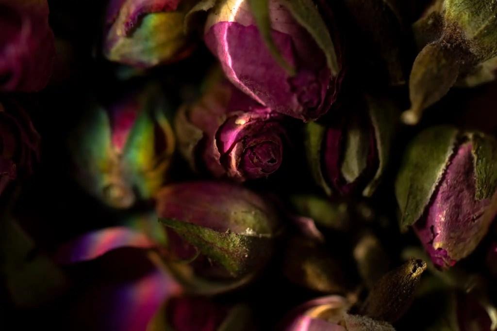 Dried pink rose buds macro