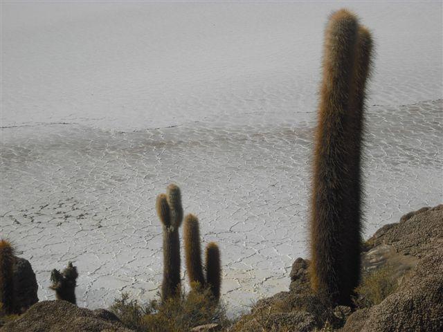 Isla del pescado - Deserto de Sal na Bolívia