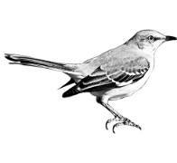 www.mockingbirdpaper.com