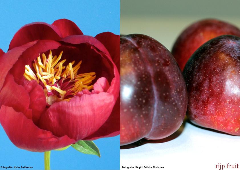 Modarium bloementrends 2014/2015 moodboard rijp fruit