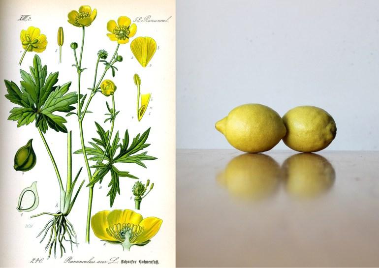 Modarium Geel moodboard 06 boterbloem en citroen