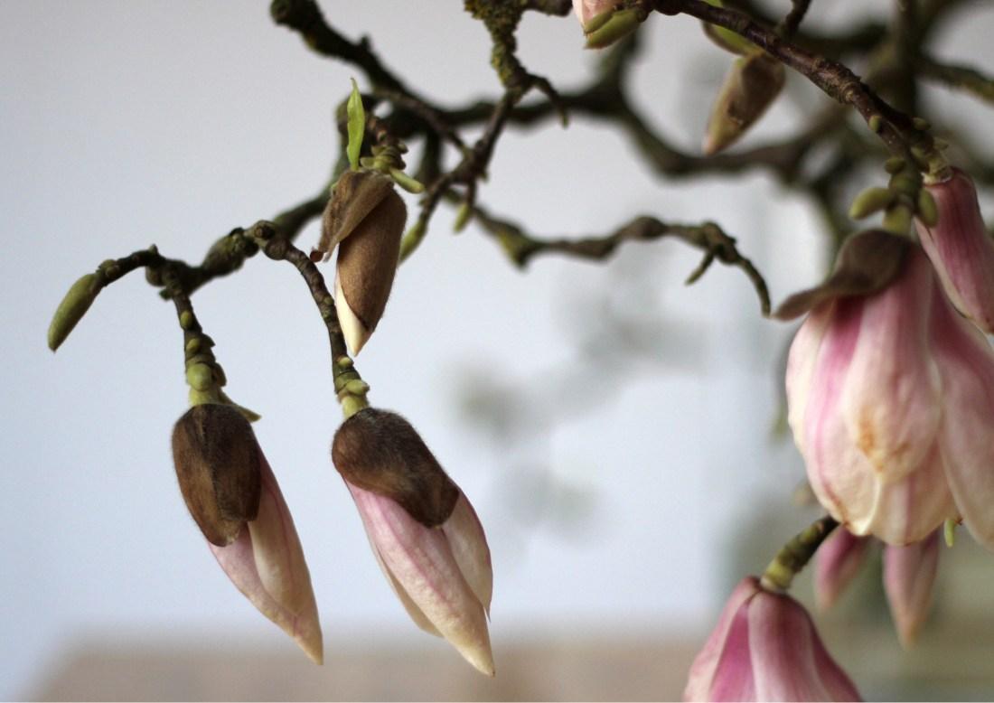 Modarium Magnolia Moodboard 02