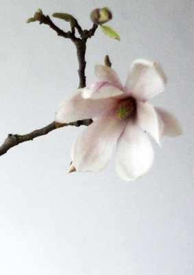 Modarium Magnolia Moodboard