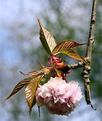 Bloesem als voorjaars-inspiratie