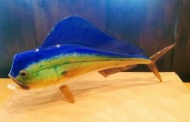 **ITEM NOW SOLD**Mahi Mahi by Michael Hopko. Blown glass. Purchased at Elements Gallery in Bellevue.List Price:$620.-Modele's Price: 325.-