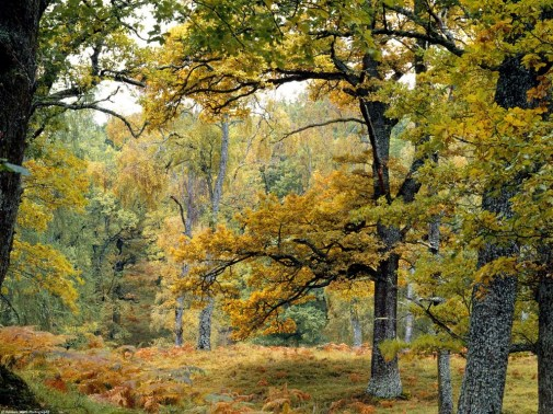 old_growth_forest_scottish_highlands