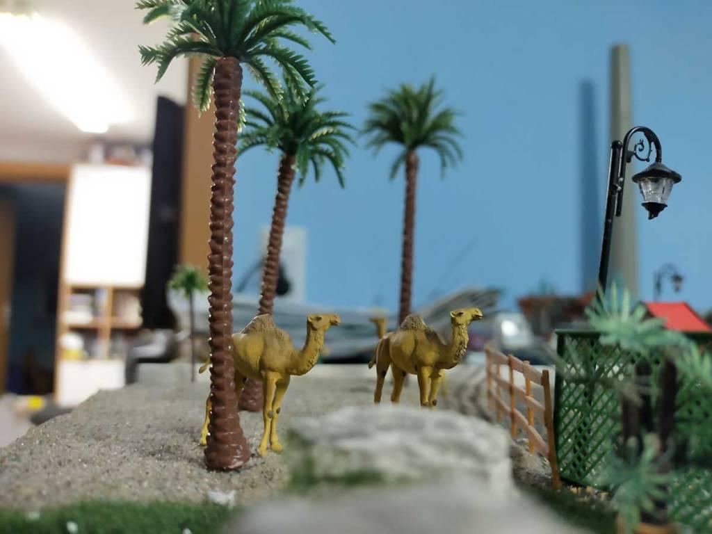 Palmen im Zoo bei den Dromedas