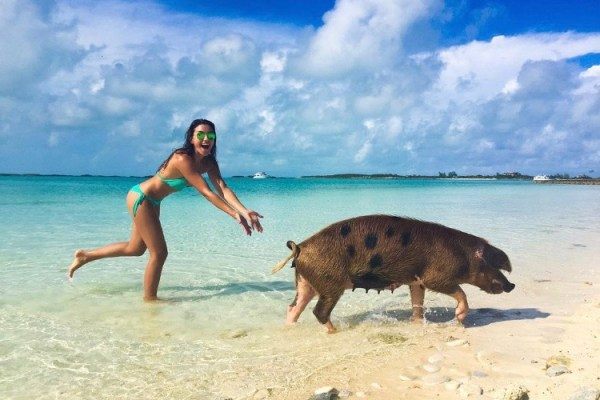 swim with pigs, bahamas