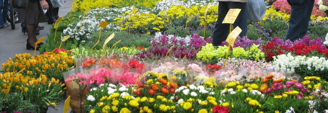 Mostra mercato piante grasse e succulente a Modena