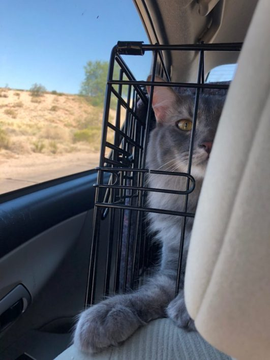 Miraculous Traveling With Cats Road Trip Tips Modern Meow Evergreenethics Interior Chair Design Evergreenethicsorg