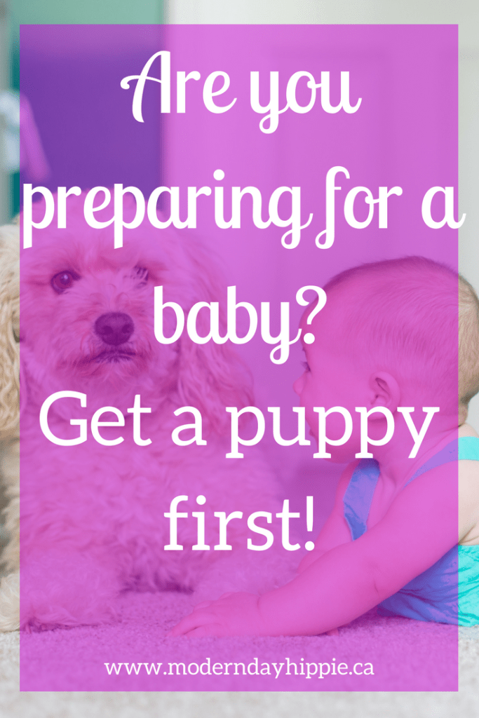get a puppy before having a baby