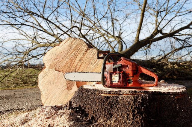 Chainsaw of woodworker