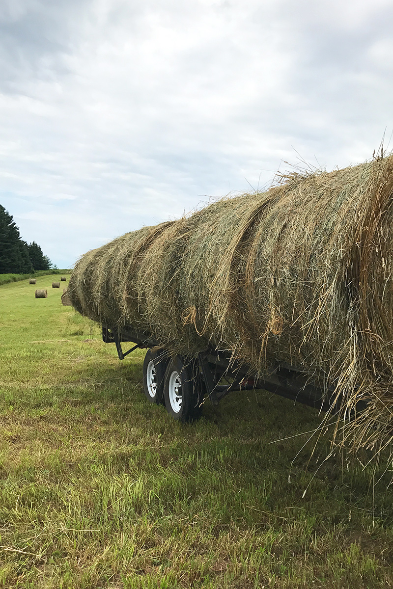 Wagon with round hay bales