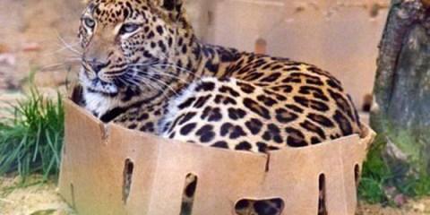 catboxfeature
