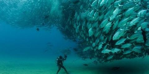 fishfeature