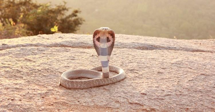 snakemain