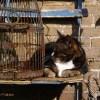 Cat basking in the sunlight