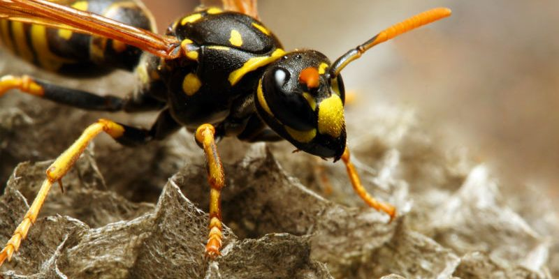 How to Deal With Yellow Jackets in Your Garden