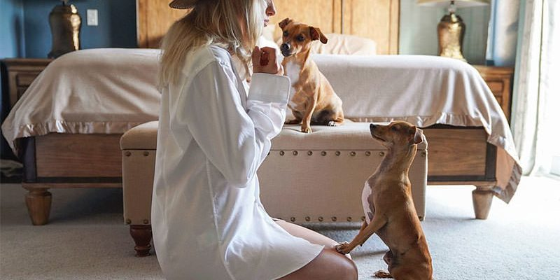 Positive Reinforcement: Types of Dog Training
