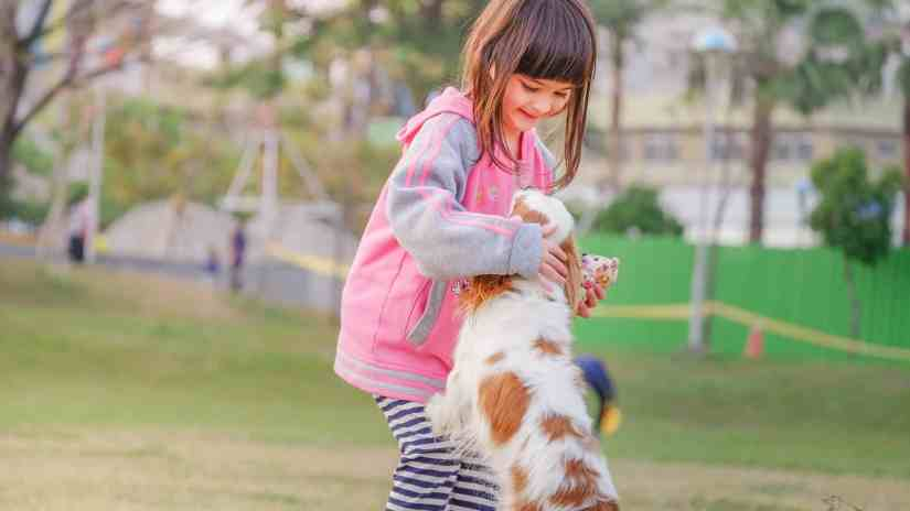 play with dog garden