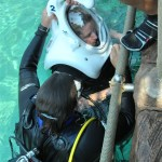 Enjoying an Underwater Reef Walk with Discovery Cove's SeaVenture