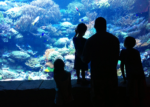 SeaWorld Orlando Underwater Viewing