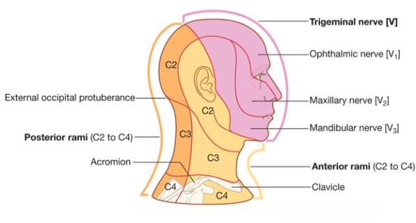 trigeminal-neuralgia