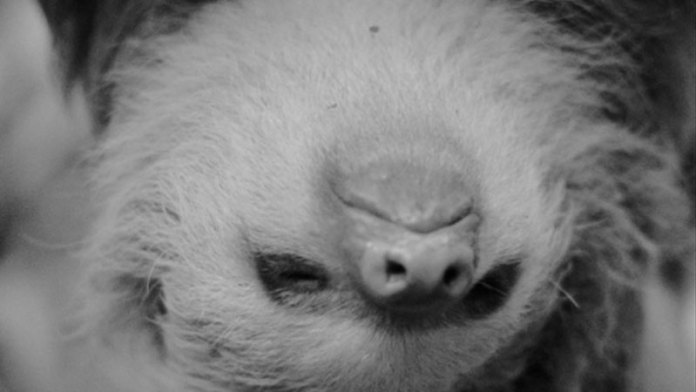 Sloth-Time-Documentary-Post1