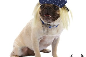Bee or Bret Michaels? Four-legged friends gear up for Halloween