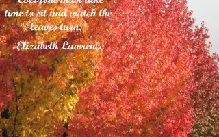 Take time to watch the leaves turn