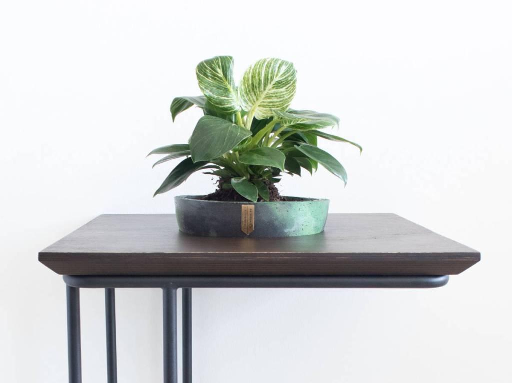Botanical Temple stolić iz profila
