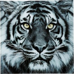 Bild: Face to Face with the tiger Anmutig