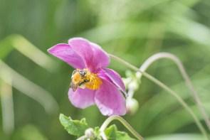 蜜を集める