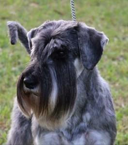 grooming picture - Grooming