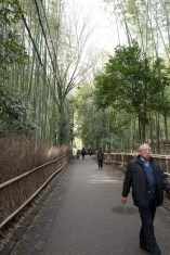 View from the Bamboo Forest