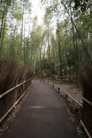 More bamboo forest