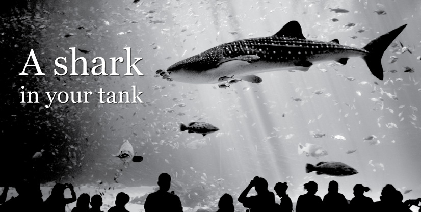 A shark in your tank