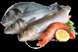 Koľko bielkovín obsahujú ryby ako napríklad losos.