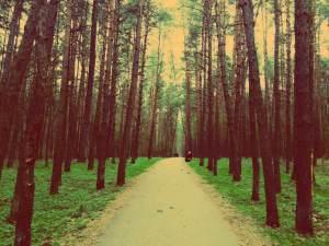 Vilnius im Sommer. Vingis Park in Vilnius