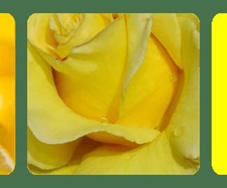 Yellow-Mac.png